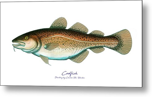 Codfish - Metal Print