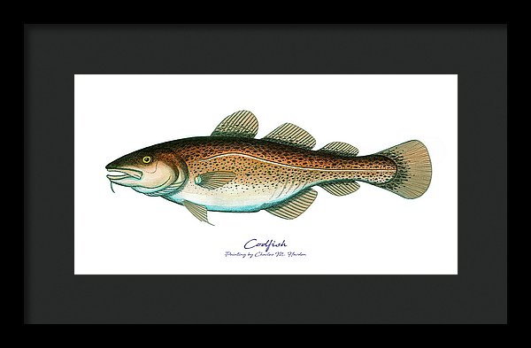 Codfish - Framed Print