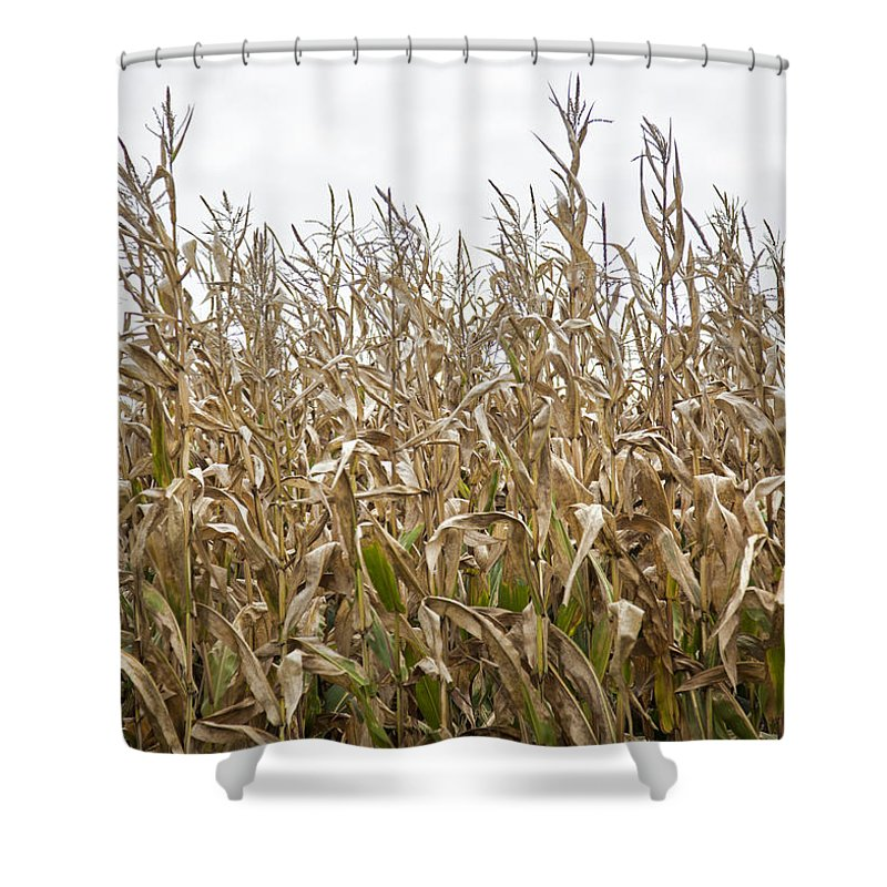 Vermont Cornfield Farm Near Stowe - Shower Curtain