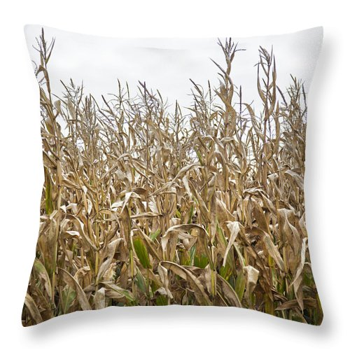 Vermont Cornfield Farm Near Stowe - Throw Pillow