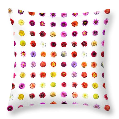 Dahlias - Throw Pillow