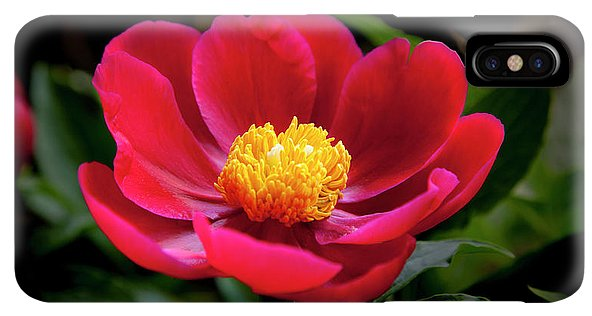 Evening Peony - Phone Case