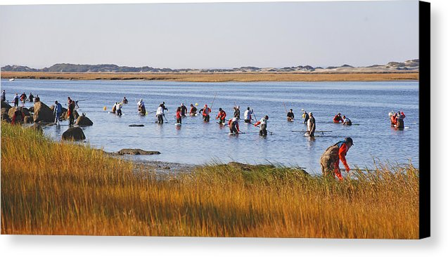 Fall Shellfishing For Barnstable Oysters - Canvas Print