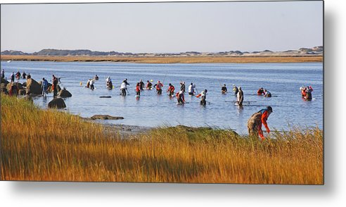 Fall Shellfishing For Barnstable Oysters - Metal Print