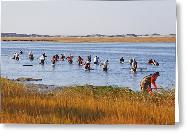 Fall Shellfishing For Barnstable Oysters - Greeting Card