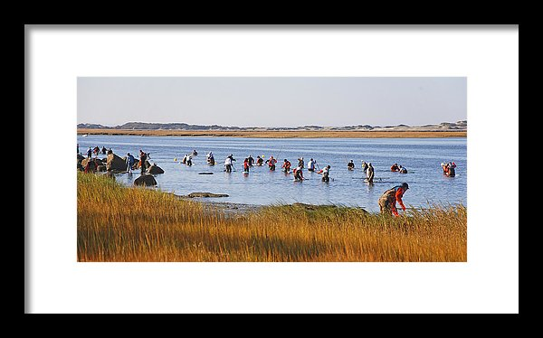 Fall Shellfishing For Barnstable Oysters - Framed Print