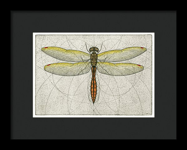 Golden Winged Skimmer - Framed Print