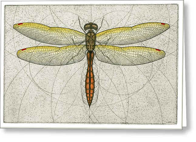 Golden Winged Skimmer - Greeting Card