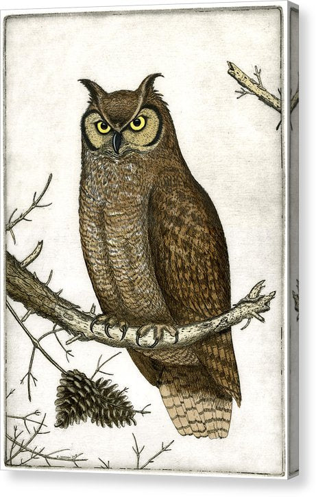 Great Horned Owl - Canvas Print