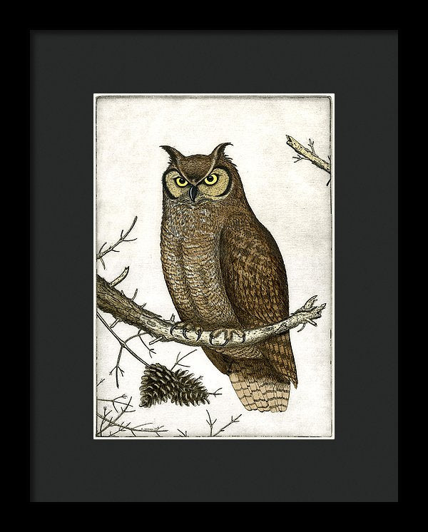 Great Horned Owl - Framed Print