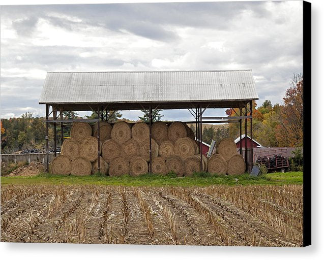 Hay Bales In Vermont - Canvas Print