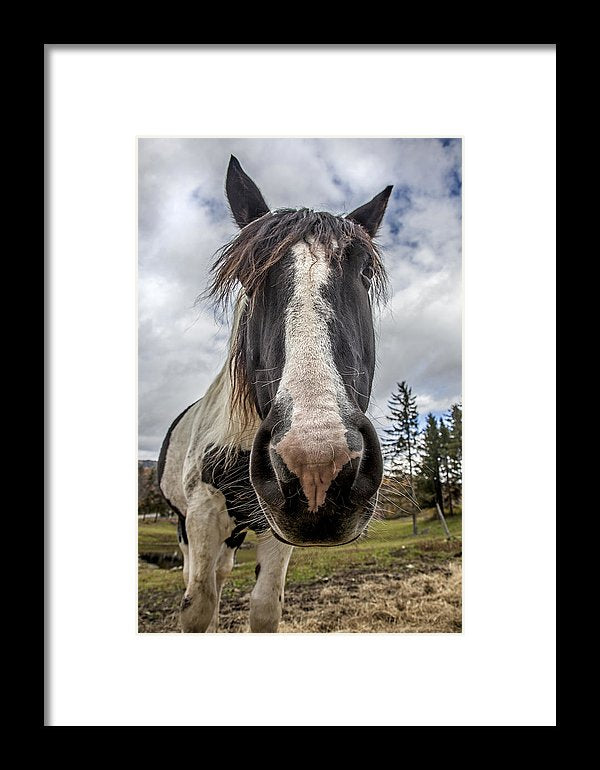 Stowe Vermont Horse Portrait - Framed Print