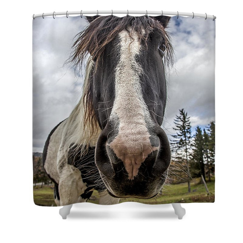 Stowe Vermont Horse Portrait - Shower Curtain