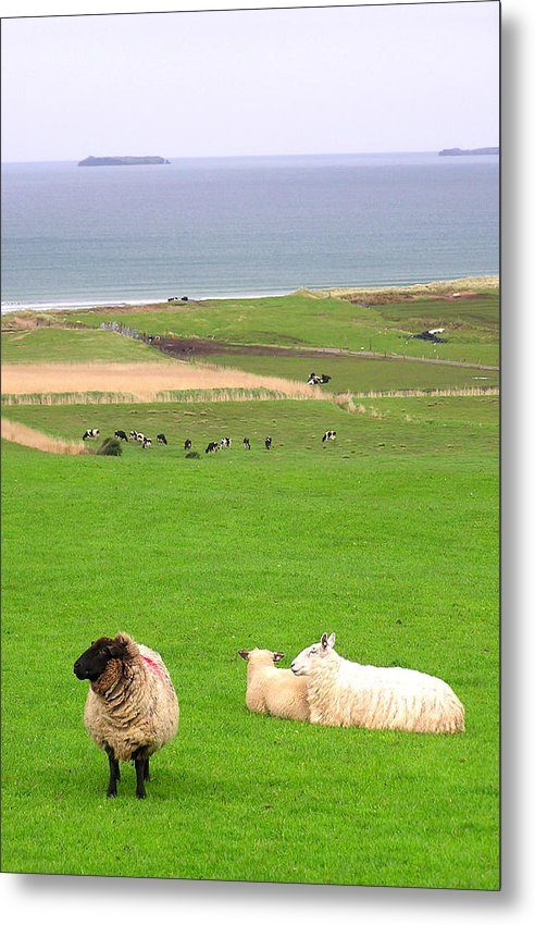 Irish Coast County Kerry Dingle - Metal Print