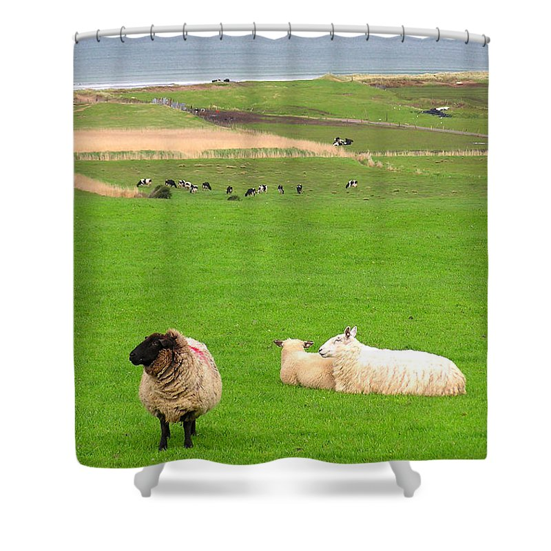 Irish Coast County Kerry Dingle - Shower Curtain