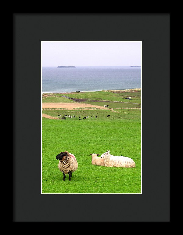 Irish Coast County Kerry Dingle - Framed Print