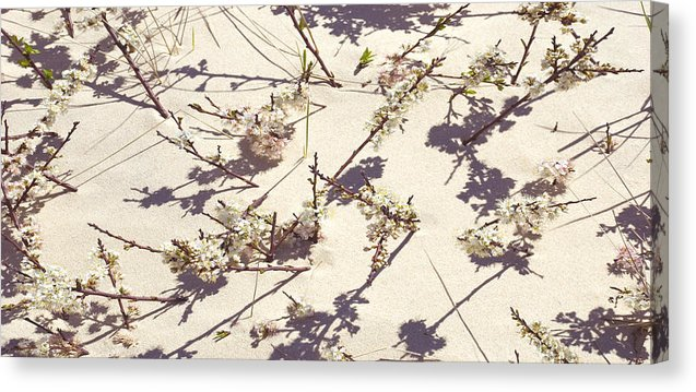Tashmoo Sand Dune With Blossoms - Canvas Print