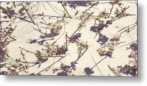 Tashmoo Sand Dune With Blossoms - Metal Print