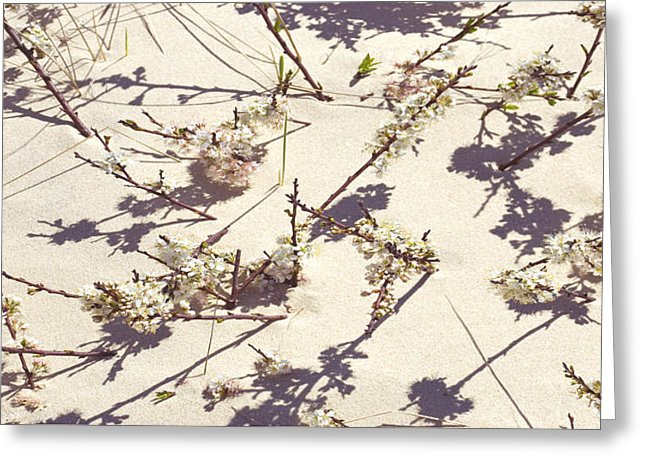Tashmoo Sand Dune With Blossoms - Greeting Card
