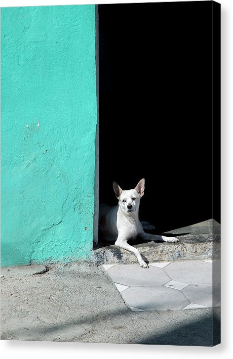 Little Dog In Doorway Havana Cuba - Canvas Print