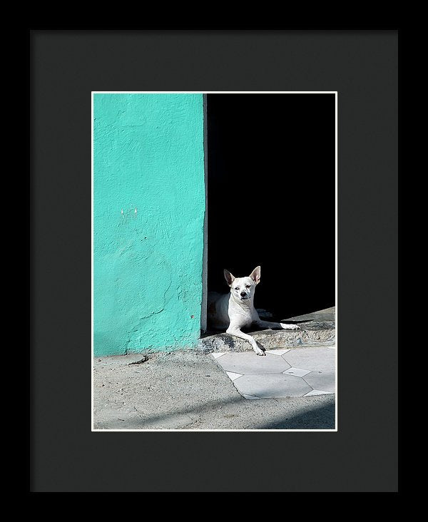 Little Dog In Doorway Havana Cuba - Framed Print