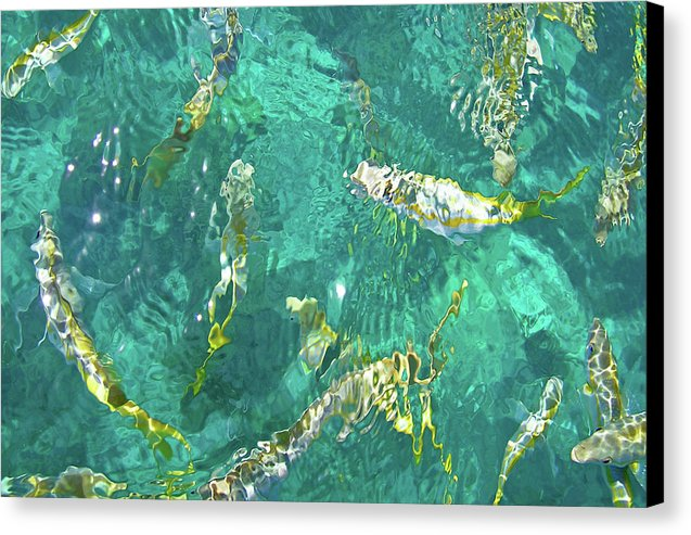 Looe Key Reef - Canvas Print