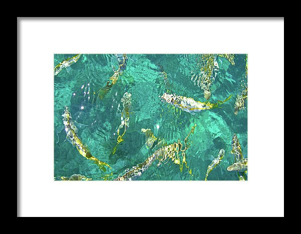 Looe Key Reef - Framed Print