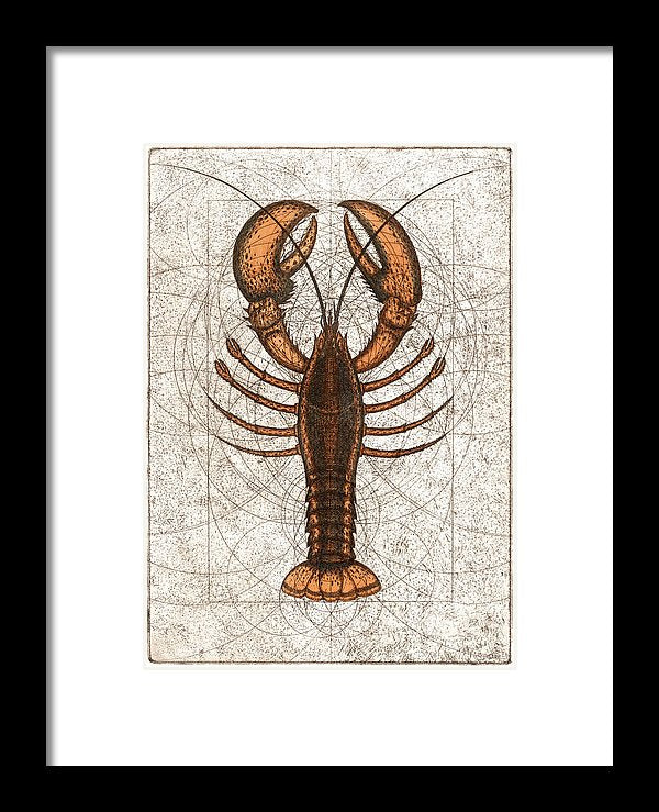 Northern Lobster - Framed Print