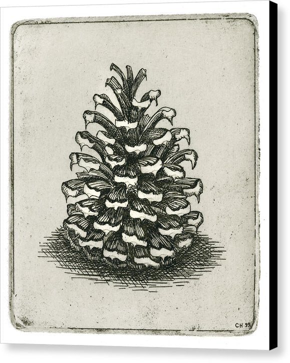 One Pinecone - Canvas Print