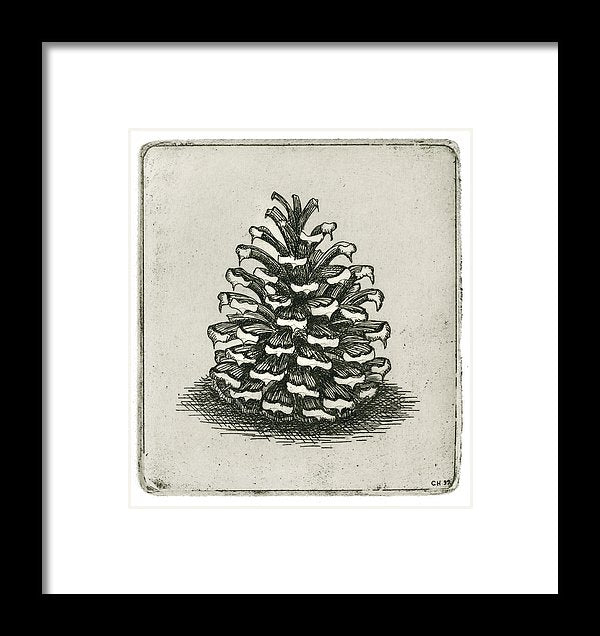 One Pinecone - Framed Print