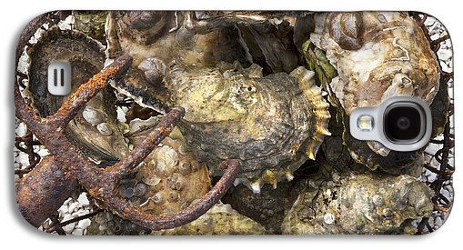 Oysters - Phone Case