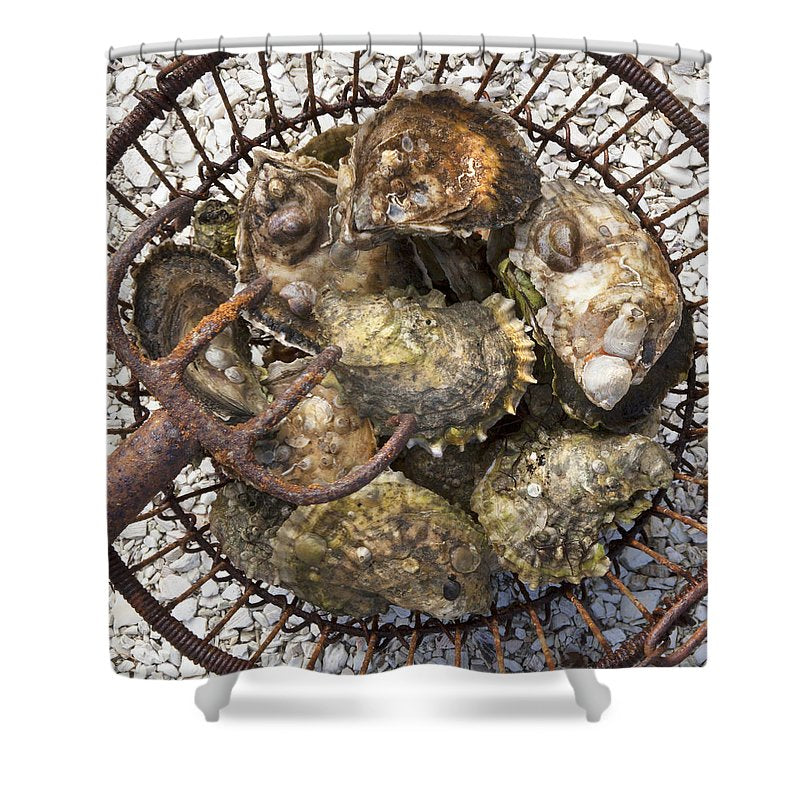 Oysters - Shower Curtain