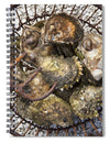 Oysters - Spiral Notebook