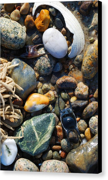Rocks And Shells On Sandy Neck Beach - Canvas Print