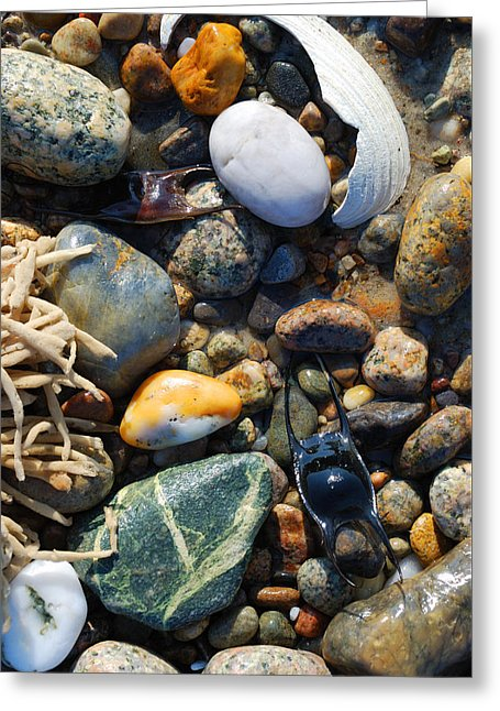 Rocks And Shells On Sandy Neck Beach - Greeting Card