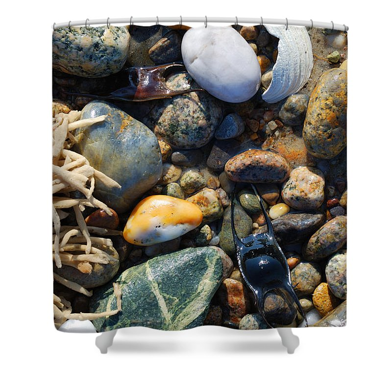 Rocks And Shells On Sandy Neck Beach - Shower Curtain