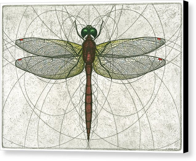 Ruby Meadowhawk Dragonfly - Canvas Print