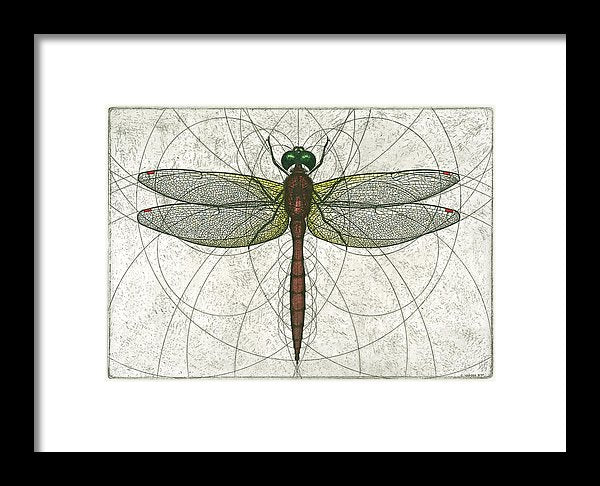 Ruby Meadowhawk Dragonfly - Framed Print