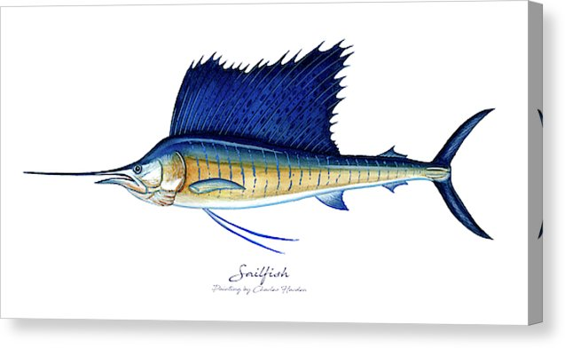 Sailfish - Canvas Print