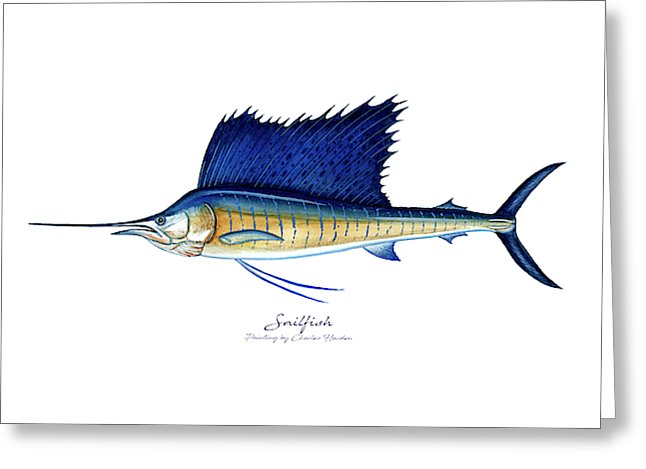 Sailfish - Greeting Card