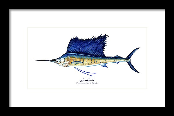 Sailfish - Framed Print