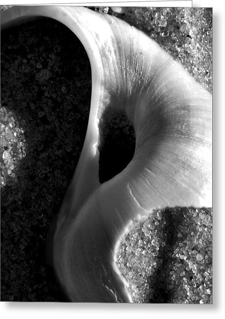 Black And White Shell Portrait - Greeting Card