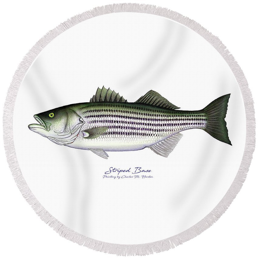 Striped Bass - Round Beach Towel