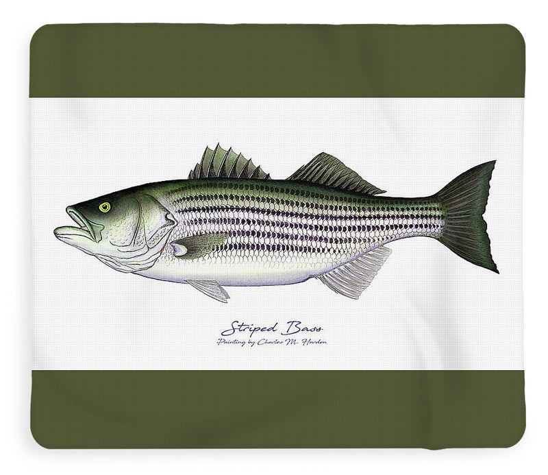 Striped Bass - Blanket