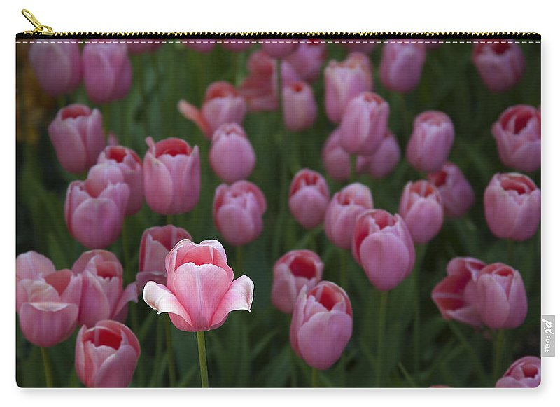 Sun Kissed Tulip - Carry-All Pouch