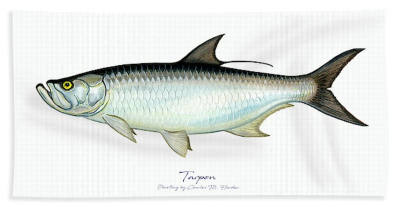 Tarpon - Beach Towel