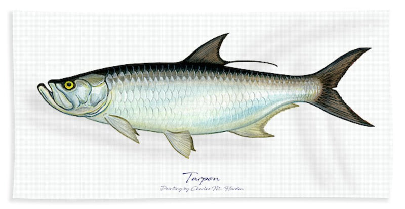 Tarpon - Bath Towel