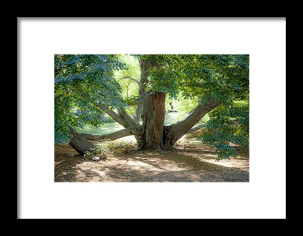 The Climbing Tree - Framed Print
