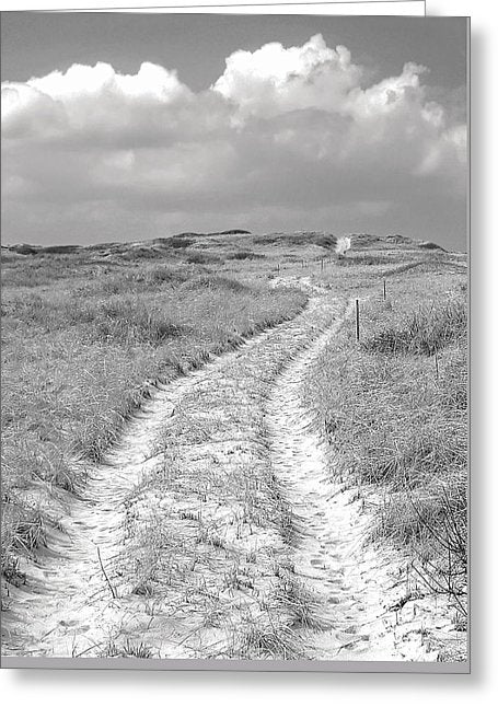 Truro Dune Trail - Greeting Card
