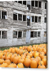 Vermont Pumpkins - Canvas Print
